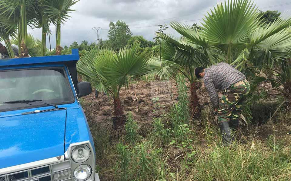 درختکاری محیط ویلا ، دهکده ویلایی الیت